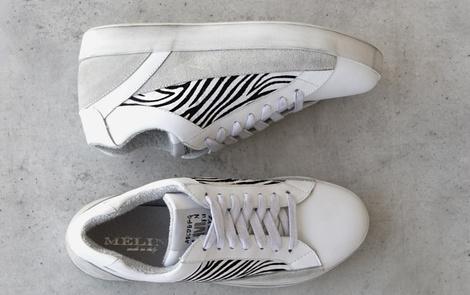 CHUCK zebra (6)pi